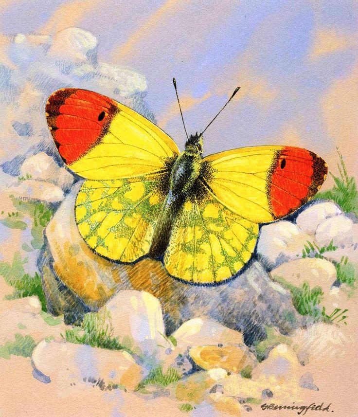 Английский художник Gordon Beningfield (1936-1998)