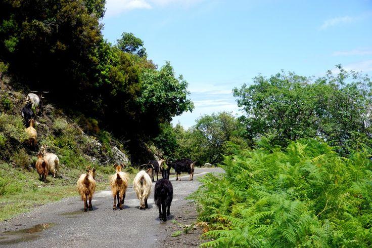 castagniccia corse road trip blog voyage 03