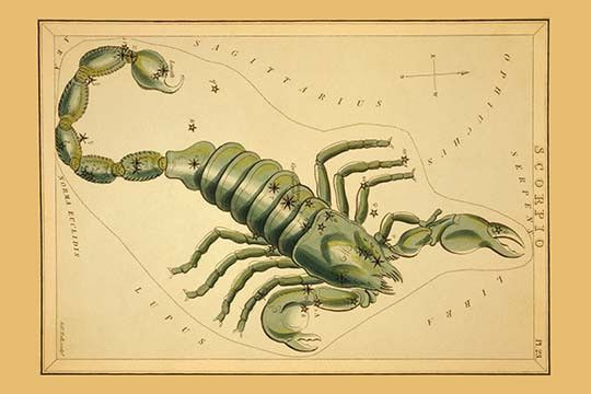 Astronomical chart showing a scorpion forming the constellation.