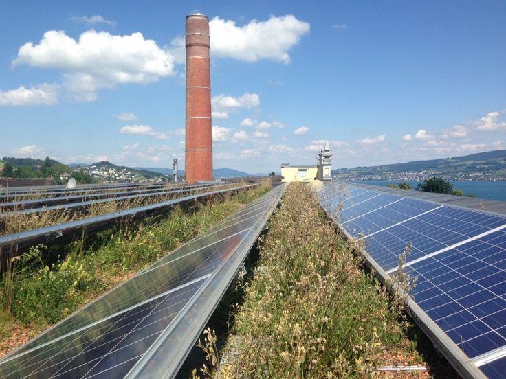 Solar green roof, Switzerland