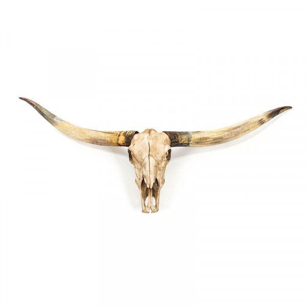 Texas Long Horn Skull Wall Decor Wall Decor Accessories Skull Wall Decor Longhorn Skull Bull Skulls