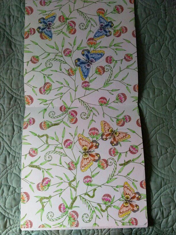 Pencils,KM, Millie Marotta, Animal Kingdom, butterflies