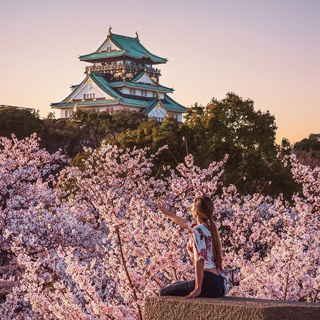 Reaching For Cherry Blossoms At Osaka Castle Photo Of Devon Devstinations By Stephen Barna Barnadrift Africa Travel Travel Aesthetic Japan