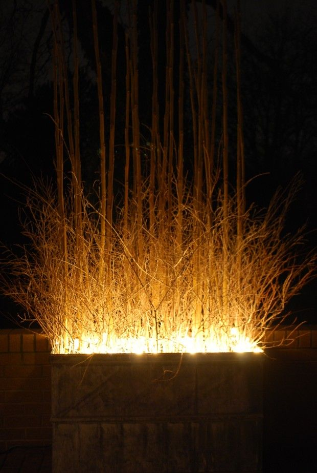 Ornamental grass in planters with fairy lights grouped at the base of them. These would be beautiful for an evening garden wedding...
