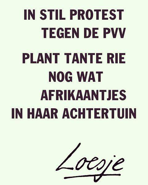 In stil protest tegen de pvv, plant tante rie nog wat afrikaantjes in haar achtertuin, Loesje