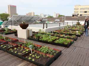 Best Green Rooftop  Vegetable Garden Images On Pinterest - Rooftop vegetable garden ideas