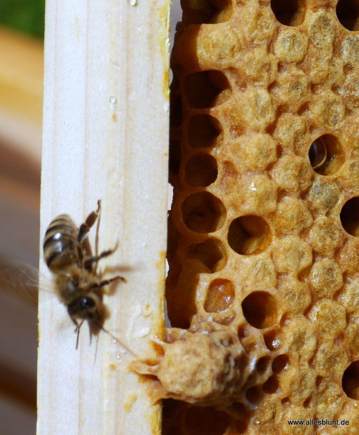 Spectacular Unser erster kleiner Bienenfilm ist online