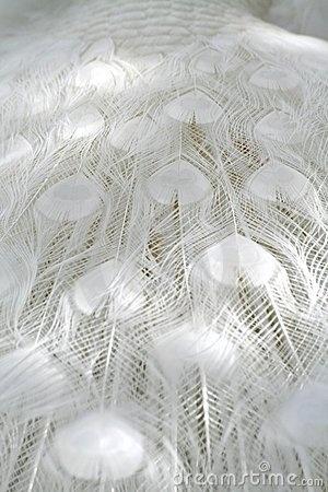 white peacock feathers #white