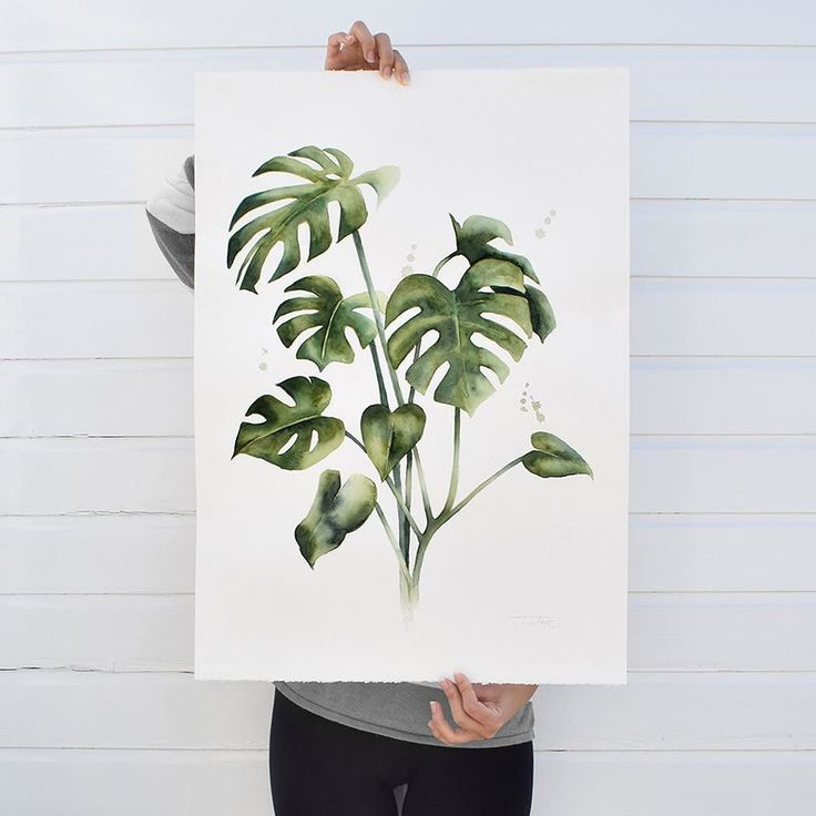 A big Monstera for the collection!  You can find it right now in my website! It's a pleasure working with watercolours on this size and paper! Also I have made a video of the process! I will post it soon!! :)    Monstera para la colección!  Puedes encontrarla ahora en mi web!  Es genial trabajar con acuarelas en este tamaño!!  He hecho un vídeo del proceso! Prometo subirlo pronto ;)