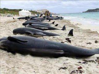 protección al medio ambiente imágenes de ballenas - Buscar con Google