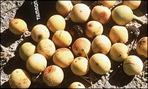 Marula Pictures