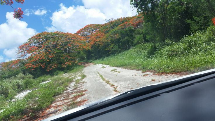 Roads of Tinian, where flame trees bloom.