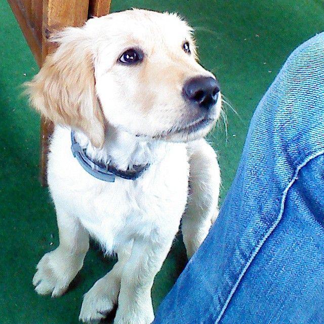 ambima_nails's dog Alfi