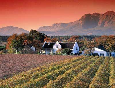 wine season in Africa