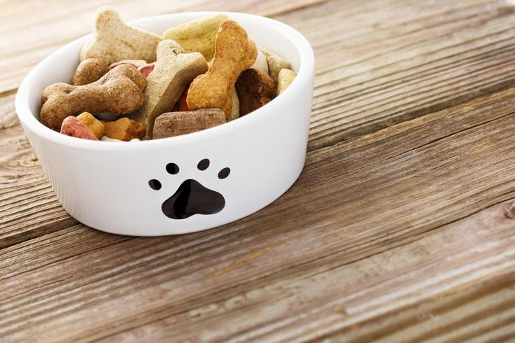 Low Protein Dog Food : Are They Useful?