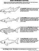 Ask A Biologist Coloring Page Shark Matching Activity