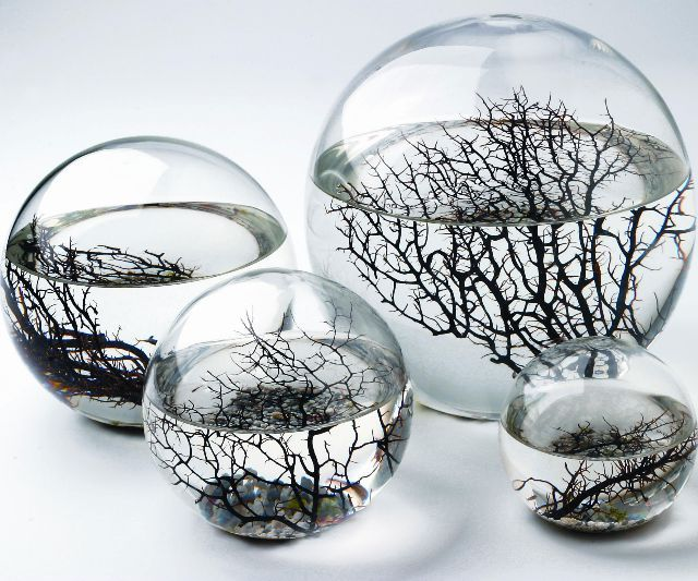 They look cool but I wonder if I could do it with something other than sea monkeys.. sea monkeys kind of gross me out  Self Sustaining Ecosphere