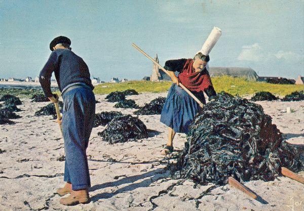 Bretagne - Les goémoniers, « moissonneurs de la mer »