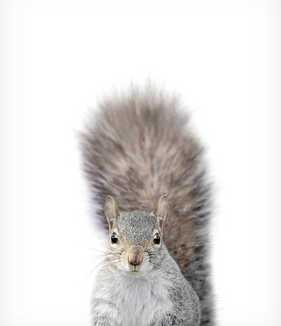 Baby squirrel print Nursery woodland animal prints The Crown – Marzena Borzecka