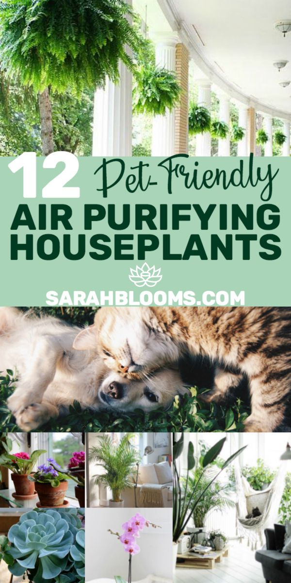 12 Air Purifying Houseplants Safe For Dogs Cats Plants Easy House Plants Air Purifier