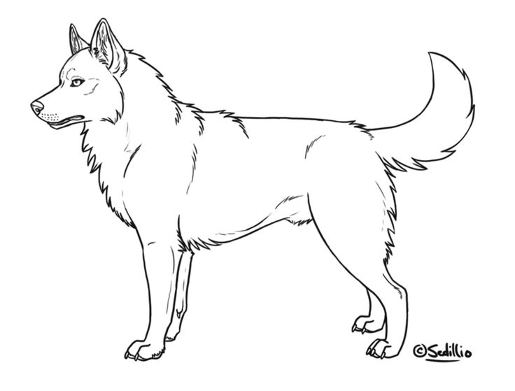 husky coloring pages printable | Alaskan Husky Coloring Pages