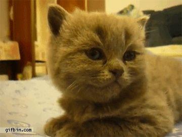 15 Cutest Kitten Gifs Of 2012
