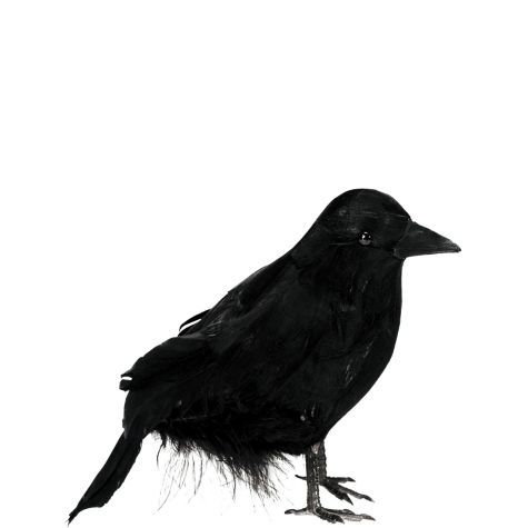 our small black raven features life like feathers and a plastic beak and claws add the small black raven to any halloween costume or halloween decorations - Raven Halloween Decorations