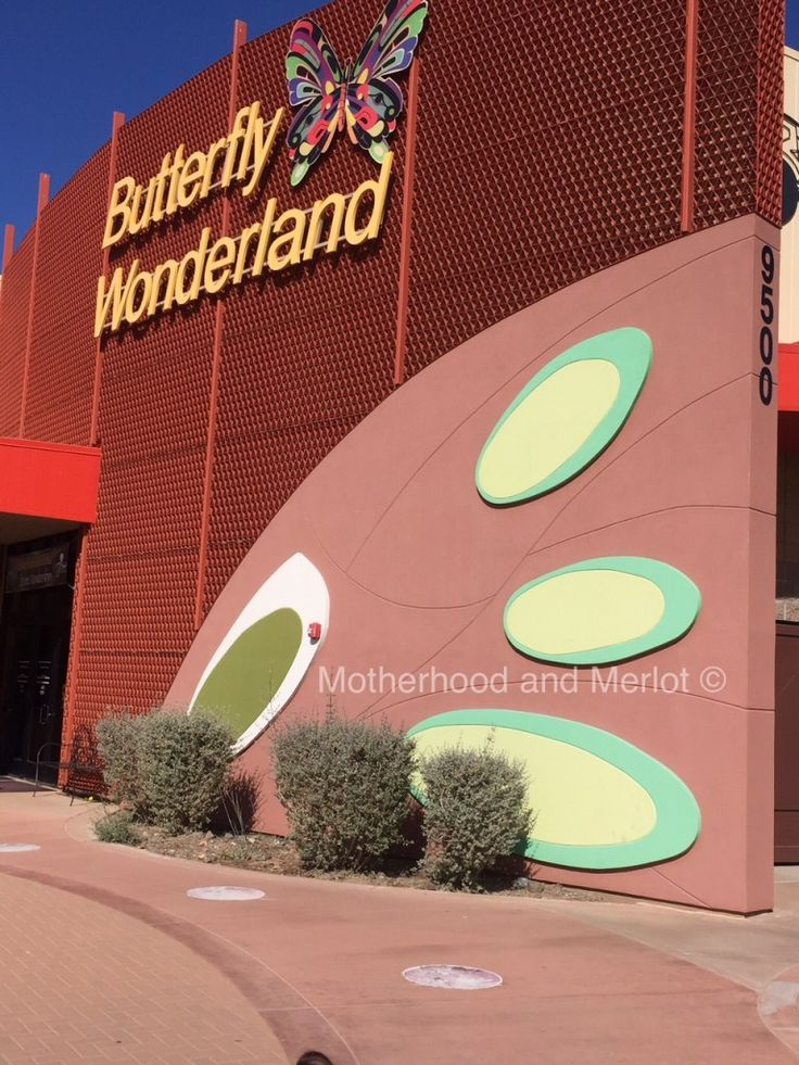 Butterfly Wonderland Scottsdale, AZ | Place to see in Arizona
