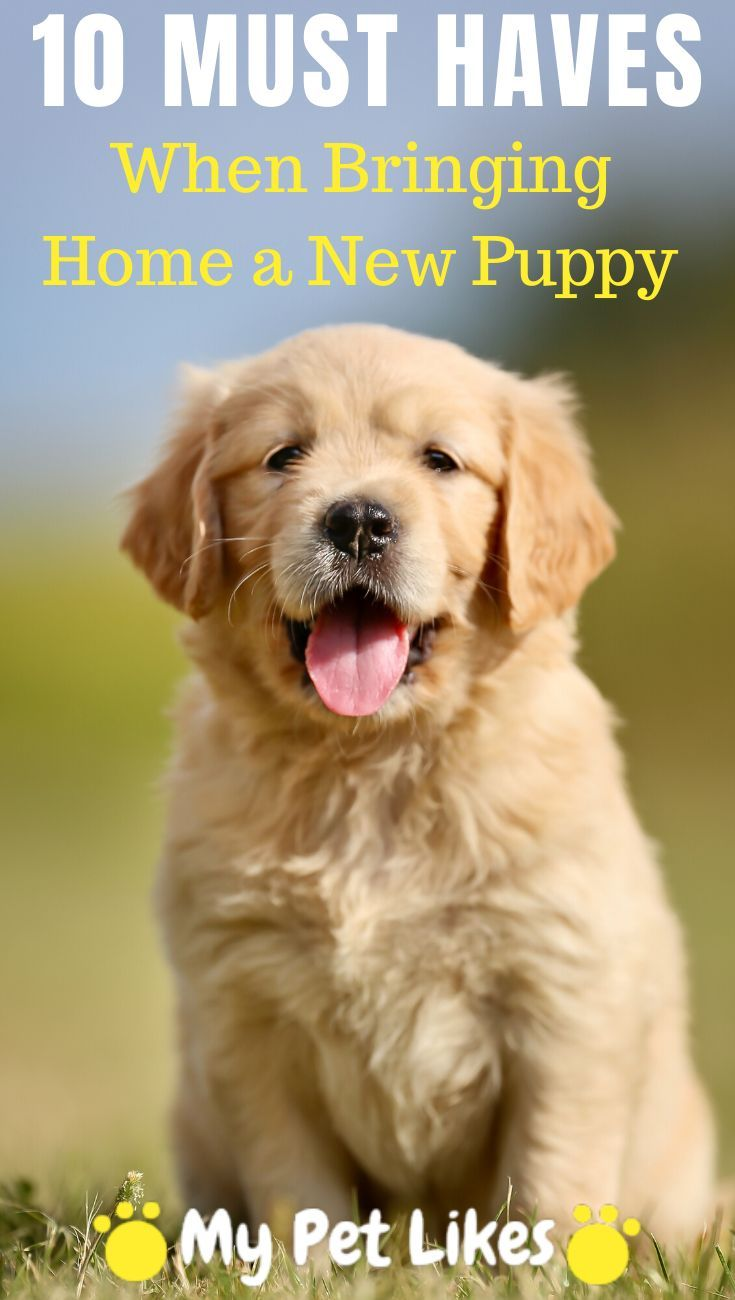 10 Must Haves When Bringing Home A New Puppy In 2020 Dog Training Easiest Dogs To Train Training Your Dog