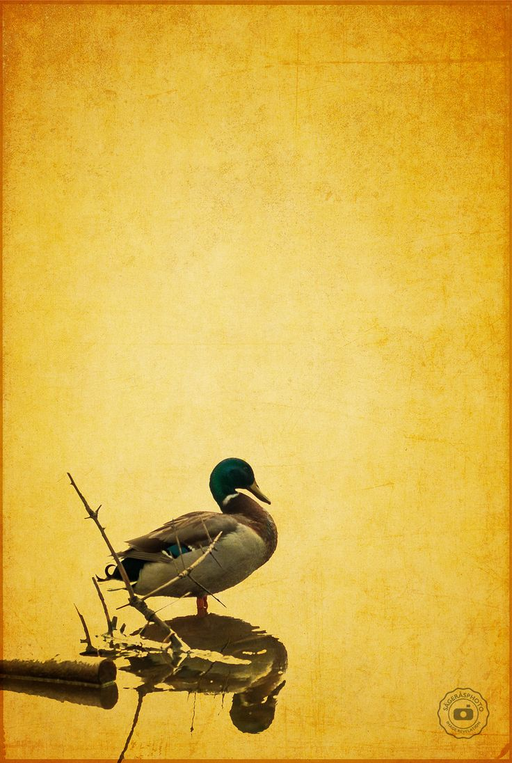 DonaldDuck - Donald Duck at hisn best. Just take the day at is come.