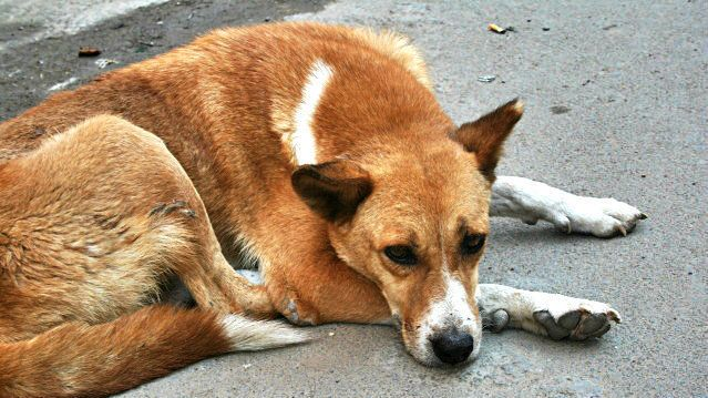 PETITION · Chief justice of india: INCREASE THE PENALTY ON ANIMAL ABUSE · Change.org