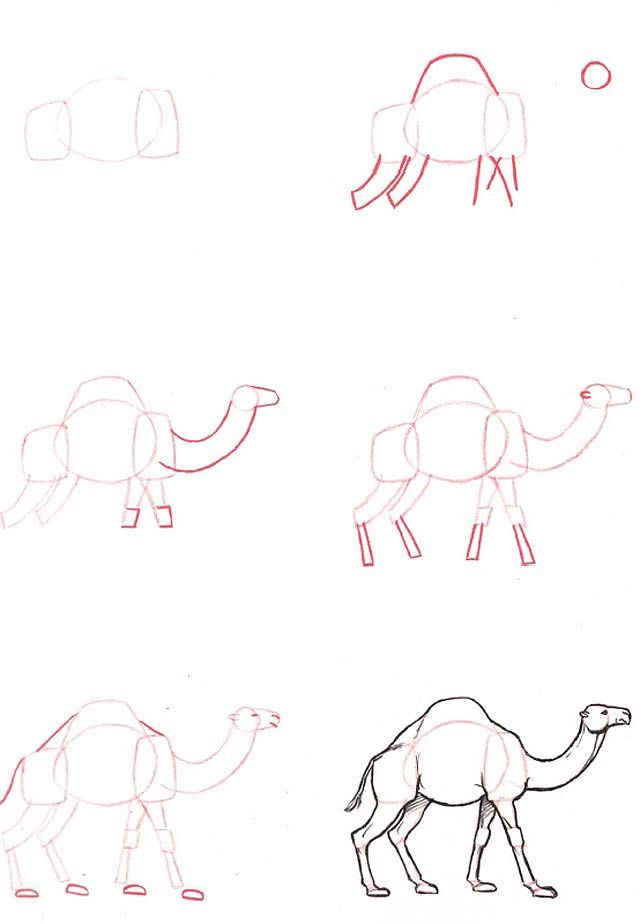 Learn to draw: Dromedary
