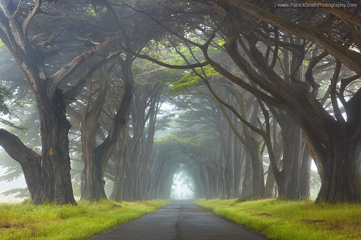 BeautifulThe Roads, Rey National, Trees Tunnel, Patricks Smith, National Seashore, Nature Photography, Places, San Francisco, Point Rey