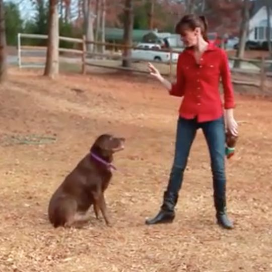 Victoria Stilwell shows you how to call your dog outside.