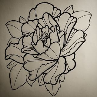 Peony drawing lines