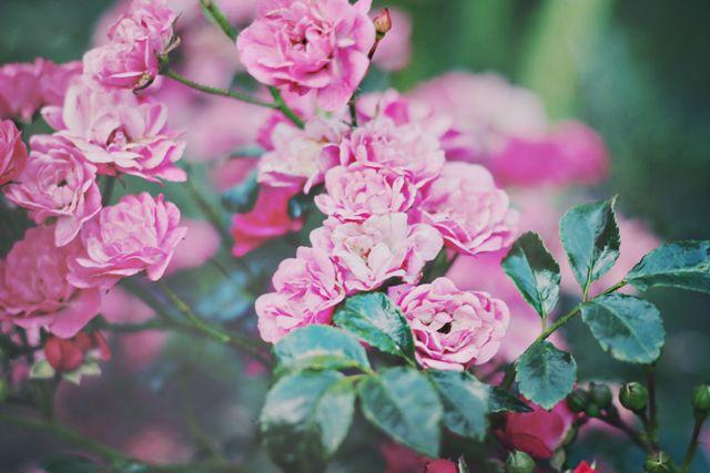 faire livrer des fleurs 08 #fleurs #bouquet