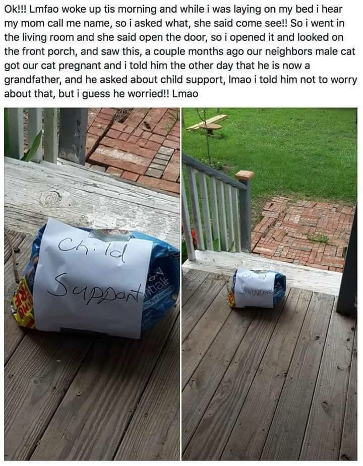 Child support - cat becomes pregnant from neighbors' male, they send a gift to the female cat's owners