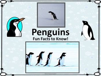 Penguins - Fun Facts About Penguins PowerPoint. All about penguins...are you using a penguin theme in your classroom? Need to read more nonfiction? Informational text for reading practice. Learn about penguins this winter! Fun facts about the life of a penguin...a study of different kinds of penguins, which can be used to introduce a unit on penguins to engage students and grab their attention.