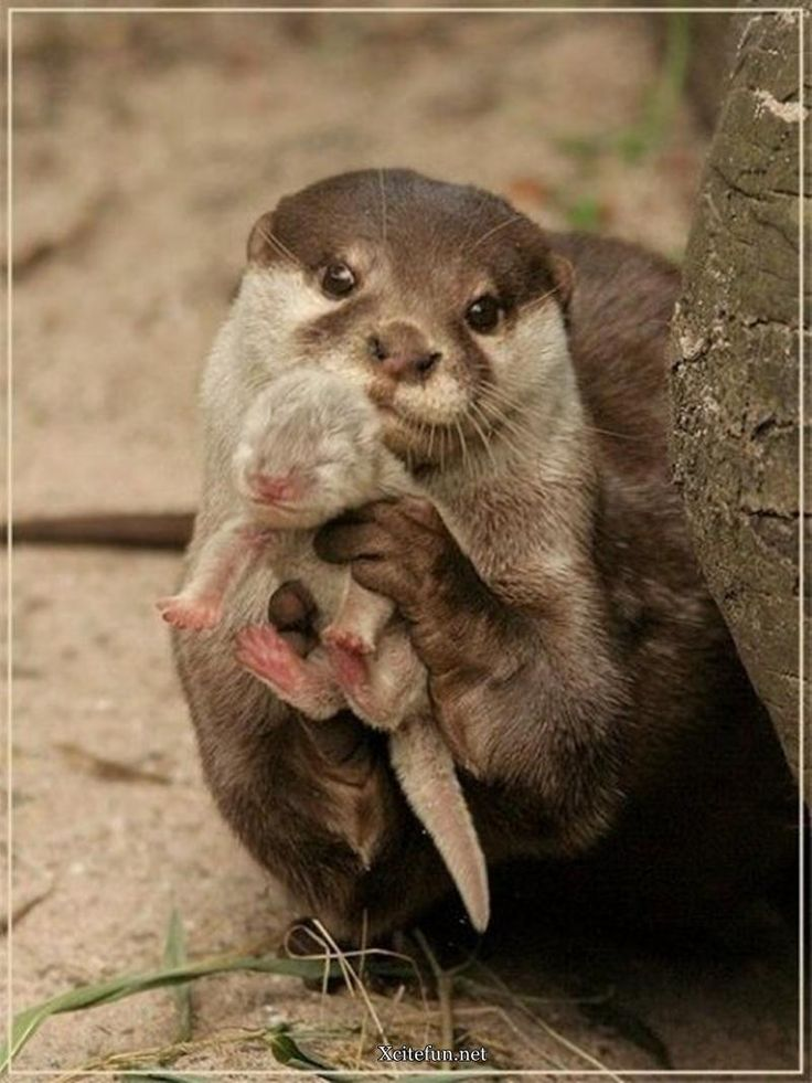 animal mother love pictures - Google Search