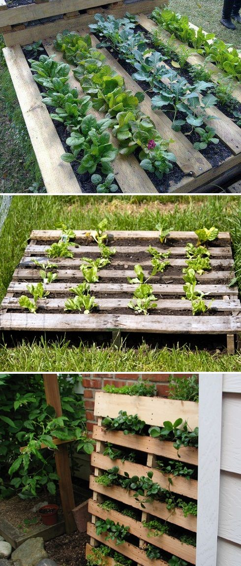 alternative gardning using a pallet as a garden bed