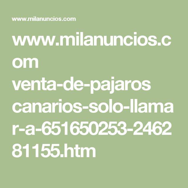 www.milanuncios.com venta-de-pajaros canarios-solo-llamar-a-651650253-246281155.htm