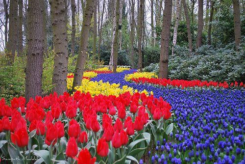 tulip flower path, keukenhof, netherlands by Sampath Maddali, via FlickrTulip Fields, Beautiful Flower Gardens, Warm Colors, Gardens Paths, Rivers T-Shirt, The Netherlands, So Pretty, May Flower, Flower Fields