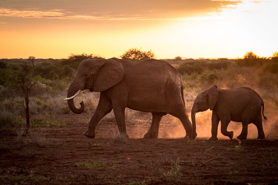 What you need to know before going on your first African safari.