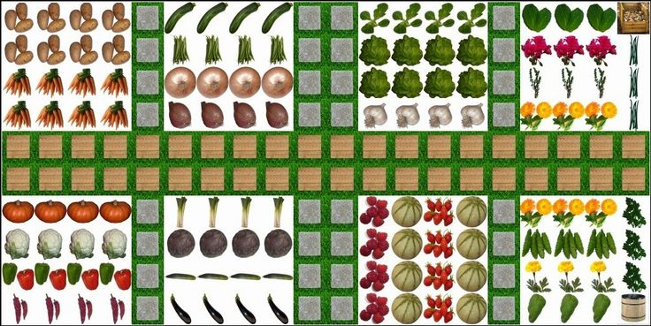 Basics of Square Foot Gardening - HOMEGROWN