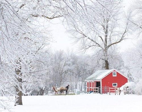 ranchHors Barns, Christmas Cards, Back Yards, Winter Wonderland, Horses Heavens, Horses Barns, Red Barns, Horse Barns