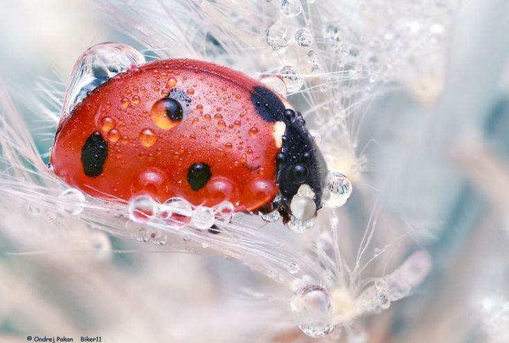20 Macro Photographs That Will Open New World to You