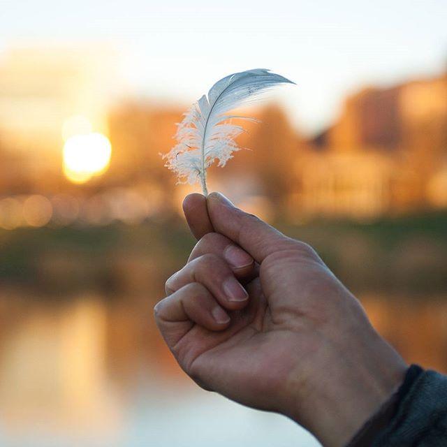 Je suis en train de finir la partie sur la question des plumes et du duvet dans mon futur livre (section sur les matériaux non-veganes pour l'habillement). Eh bien, je suis tellement heureuse de ne pas avoir de vêtements ou de couette en plumes ou duvet !.. J'ai fait le tour des alternatives véganes et écolos et, la bonne nouvelle, c'est qu'il y en a plein ! 😊 (en photo, une petite plume d'oie trouvée par terre près du lac de Louvain, où elles vivent nombreuses !) 🐣