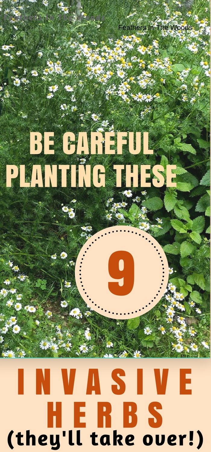 9 Herbs that want to take over your garden. Whether they reseed themselves or send out runner, these herbs need controlled carefully or they will takeover your garden!