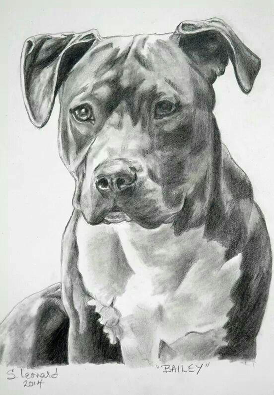 Sketch of a pitbull | Pitbulls | Pinterest | Sketches, Dog ...