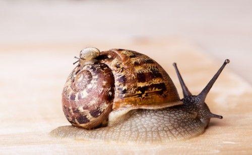 In het spoor van de slak